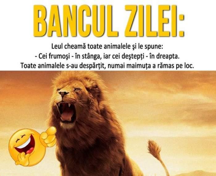 BANCUL ZILEI - MARȚI: Leul cheamă toate animalele și le spune...