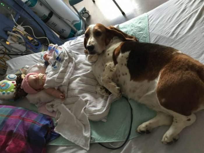 FOTO / Fetiţa era în agonie şi a fost deconectată de la aparatele care o ţineau în viaţă! Ce a făcut câinele a impresionat o lume întreagă