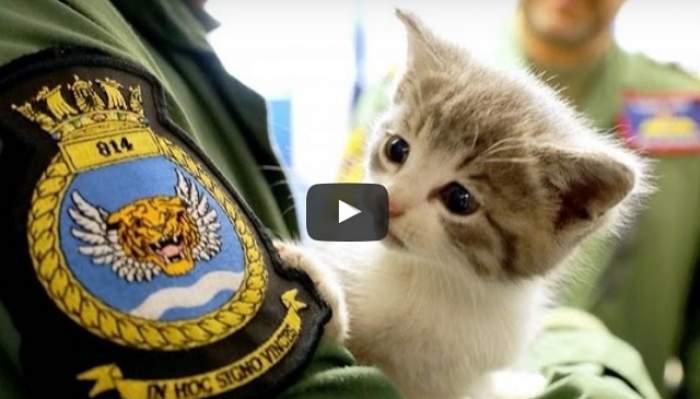 VIDEO & FOTO / Pisoi, salvat din bara de protecţie a unei maşini