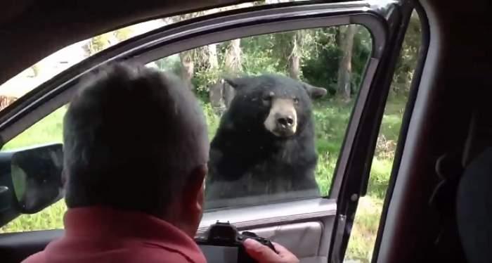 VIDEO / Momente de groază pentru o familie din SUA! Un urs s-a apropiat de maşina şi a deschis uşa! Ce a urmat...