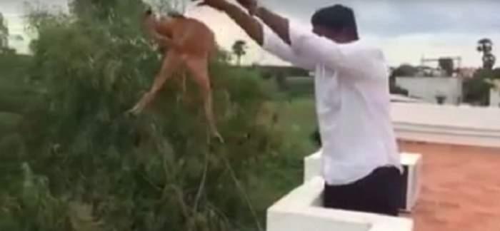 VIDEO / A aruncat un câine de la etaj, iar filmarea a revoltat o lume întreagă! Imaginile care au fost urmărite de milioane de persoane
