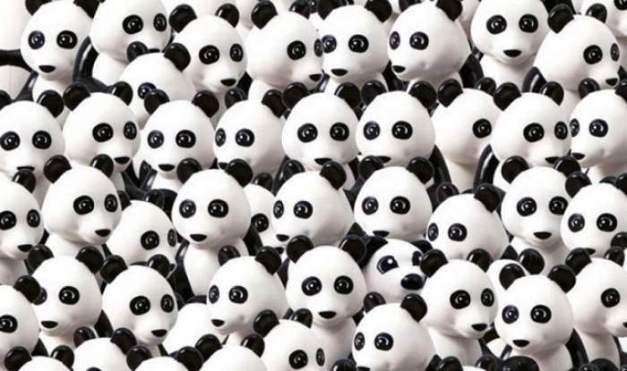 TEST! Găsește CÂINELE în mulțimea de urși PANDA! Pare simplu, dar te vei încurca