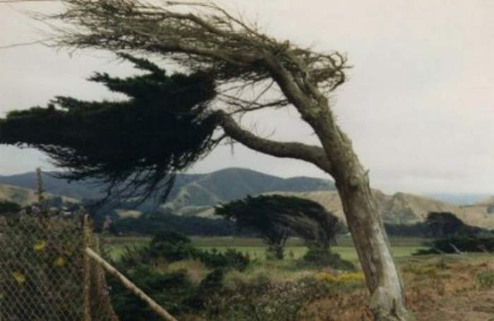 Atenționare meteo de vreme rea! Codul galben de vânt a fost activat