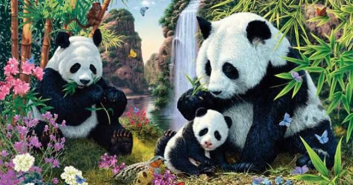 Test! Poţi să-i găseşti pe toţi ceilalţi 12 urşi panda din această fotografie? Mulţi au renunţat după ce au găsit doar 5