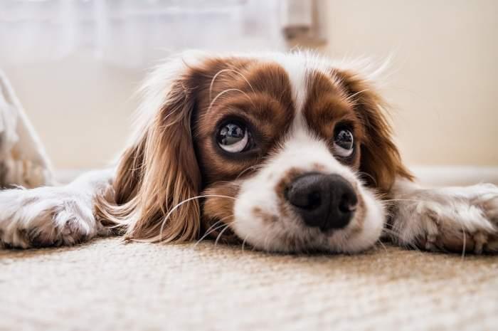Oamenii simt mai multă compasiune pentru animale, decât pentru oameni. Ce spun cele mai recente studii