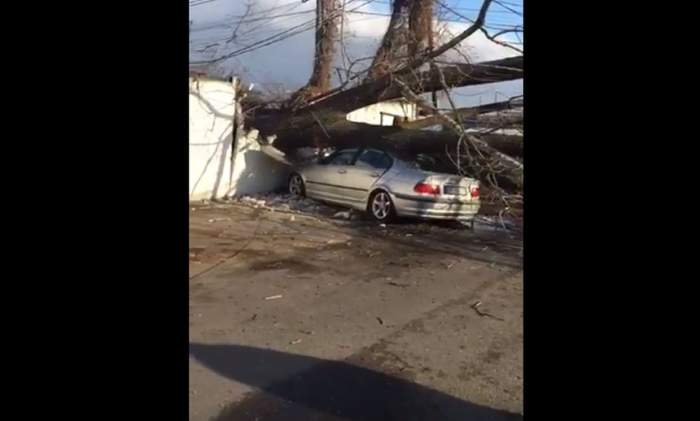 VIDEO / Dorel a dat o nouă lovitură. Cinci mașini au fost distruse de un copac tăiat greșit