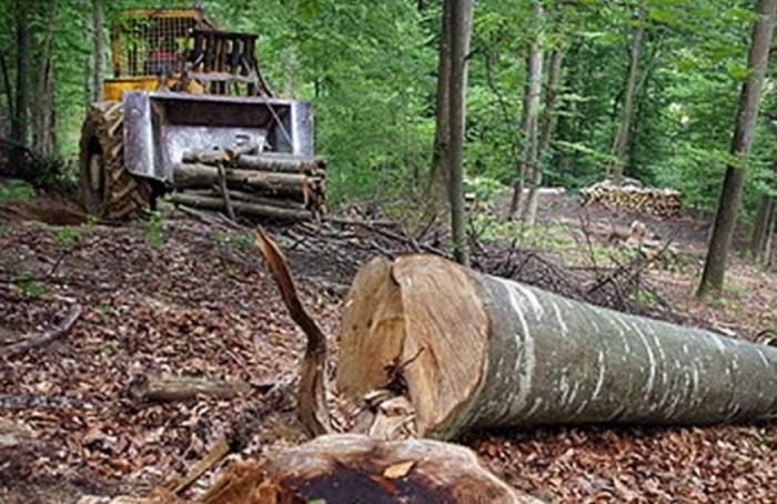 Tragedie înainte de Sărbători. Un tânăr de 27 de ani a murit după ce un copac a căzut peste el