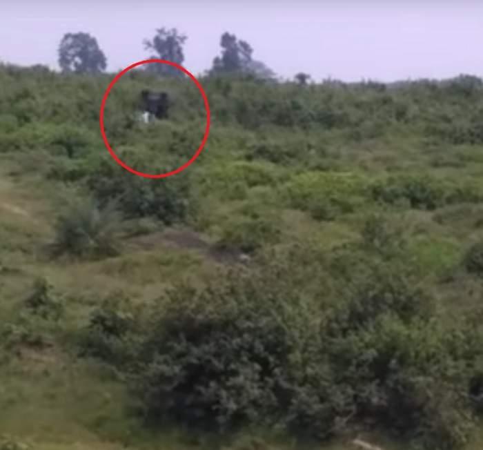 VIDEO / Tragic! A vrut să-şi facă un selfie cu un elefant, dar a murit strivit de el. Martorii au rămas şocaţi