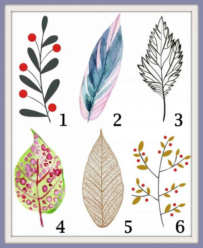 Alege o frunză și descoperă cele mai ascunse lucruri despre tine. Te identifici?