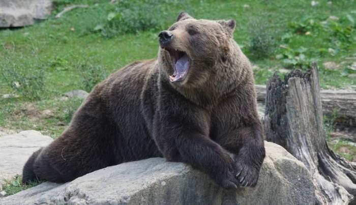 VIDEO / Minori atacaţi de urs la Zoo Bârlad! Adolescentei i-a fost sfâşiat piciorul, iar tânărului mâna, după ce au vrut să facă un selfie!