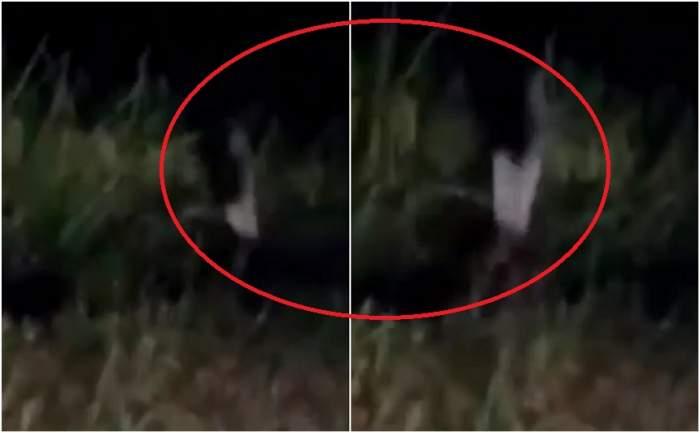 VIDEO / Imaginile care i-au băgat în sperieți pe internauți! Fetița-fantomă bântuie pădurea într-un singur picior