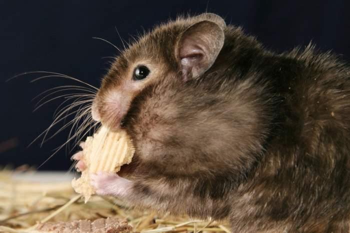 FOTO / Un bărbat a murit răpus de o boală stranie după ce a mâncat creier de veveriţă