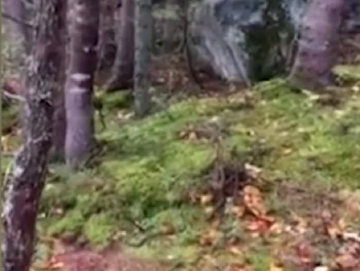 """VIDEO / """" Este cel mai înfricoşător lucru pe care l-am văzut vreodată"""". Ce a surprins un bărbat într-o pădure din Canada îţi face pielea de găină"""