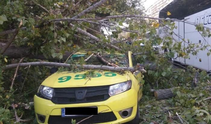 Ultimă oră! Un copac a căzut peste o maşină în Bucureşti. Şoferul este inconştient