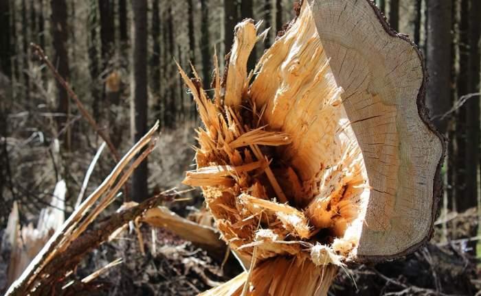 Caz şocant în Vaslui! Un pădurar a fost tăiat cu sabia de 20 de hoţi de lemne