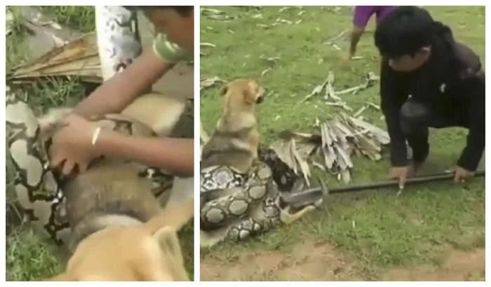VIDEO / Momentul șocant în care doi copii luptă cu un șarpe monstruos, pentru a-și salva animalul de companie