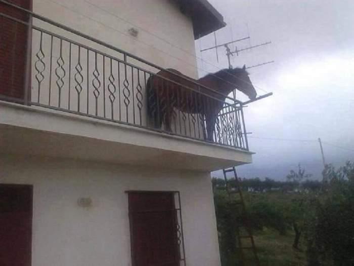 """FOTO / Făt Frumos de Cluj și-a """"parcat"""" calul pe balcon. Imaginea a ajuns virală"""