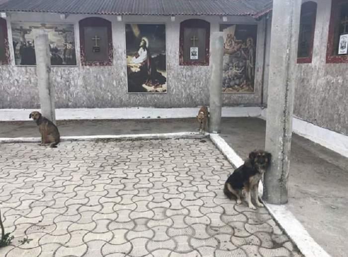 FOTO / Credinţă şi nepăsare! Câinii de la Mănăstirea din Năvodari, chinuiţi de călugări