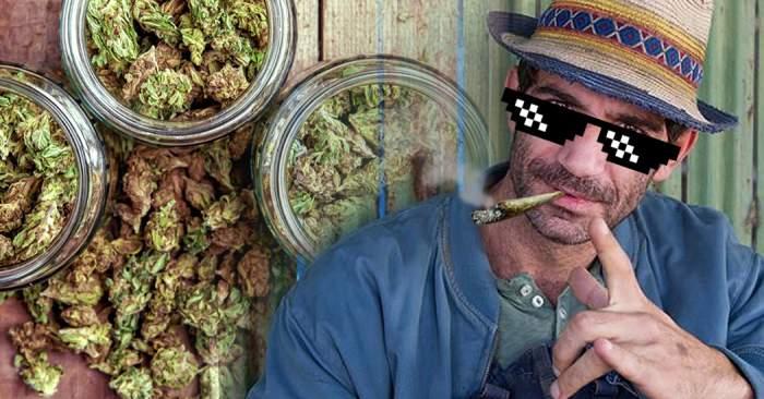"""Cât cannabis au găsit procurorii DIICOT la """"Firicel"""" din """"Las Fierbinţi""""! Detalii exclusive din dosar"""