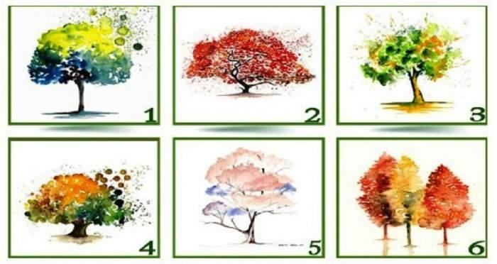 FOTO / Alege un copac şi află dacă o să te îmbogăţeşti