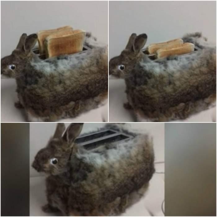 VIDEO / Iepuraşul de Paşte nu trebuie să vadă asta! Un bărbat şi-a folosit iepurele mort drept prăjitor de pâine