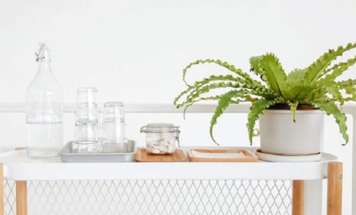 Plantele care aduc spor în casă și te feresc de rele. Trebuie neapărat să le ai