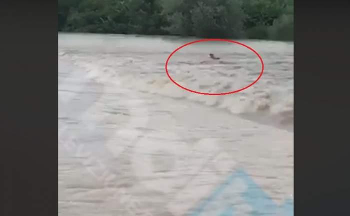 VIDEO / Imagini dramatice! Bărbat luat de viitură în Dâmboviţa