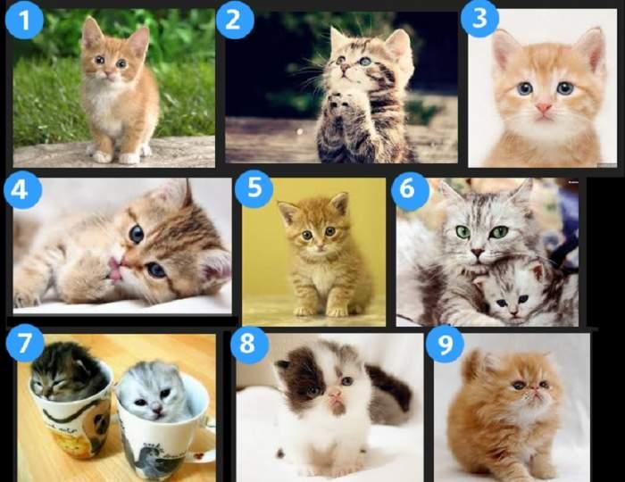 FOTO / Care pisicuță îți place cel mai mult? Alegerea ta îți va descrie personalitatea, în câteva cuvinte