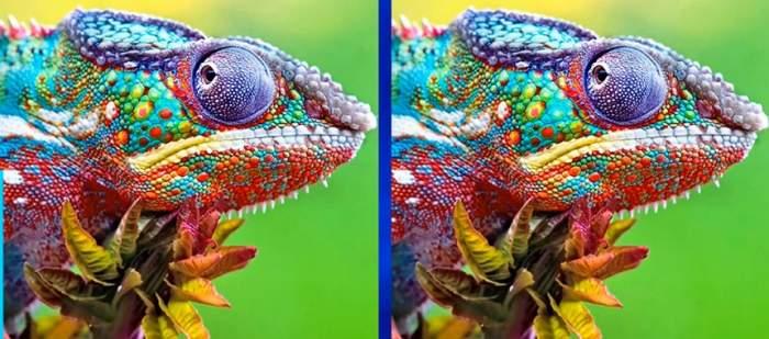 TEST: Găseşte diferenţa dintre cele două imagini în mai puţin de 10 secunde şi află dacă eşti un geniu!