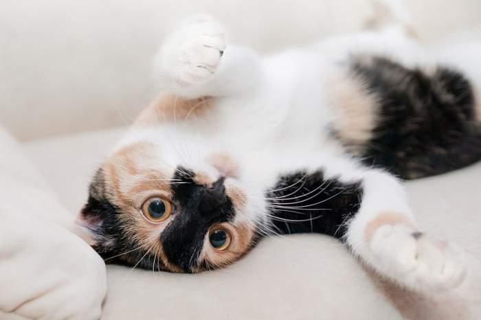 FOTO / O pisică din Marea Britanie a devenit un adevărat erou! Animalul i-a salvat viața stăpânei sale