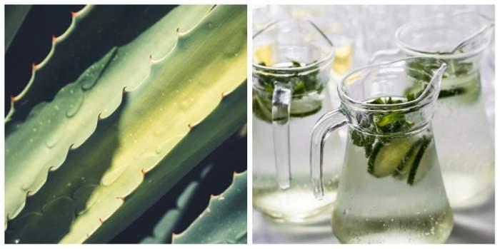 Dieta cu aloe vera. Slăbeşte cu această plantă minune