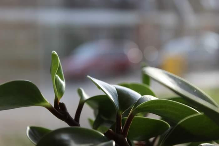 ÎNTREBAREA ZILEI: Care sunt plantele ce atrag noroc și bani în casă?