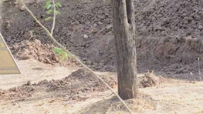 Dacă îl vezi, chiar ești tare! Tu poți să găsești leopardul din fotografie?