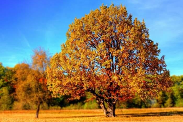 Toamnă ''toridă'' în România. Meteorologii anunță temperaturi apropiate de 30 de grade, în zilele următoare