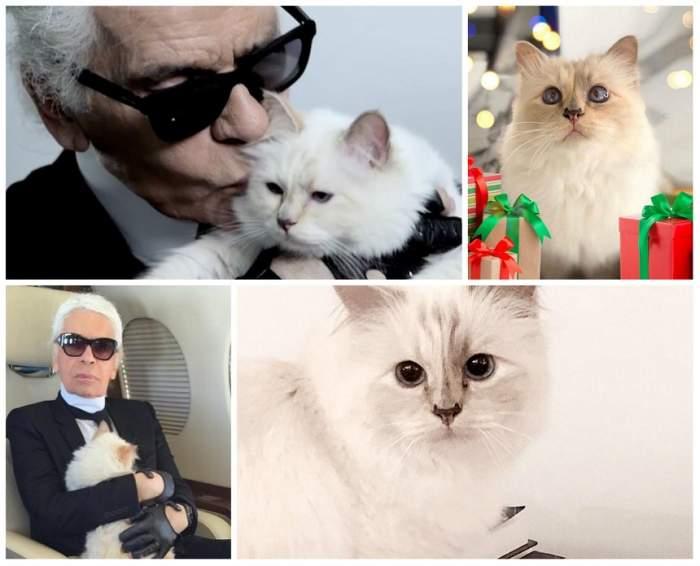 Averea lui Karl Lagerfeld va fi moștenită de pisica lui. Ce sumă colosală va primi Choupette
