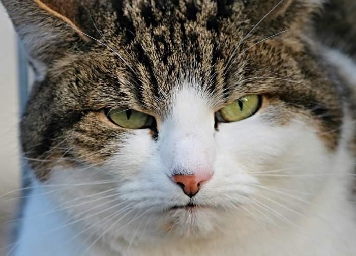 Ai o pisică agresivă? Studiile arată că ar putea fi vina stăpânilor