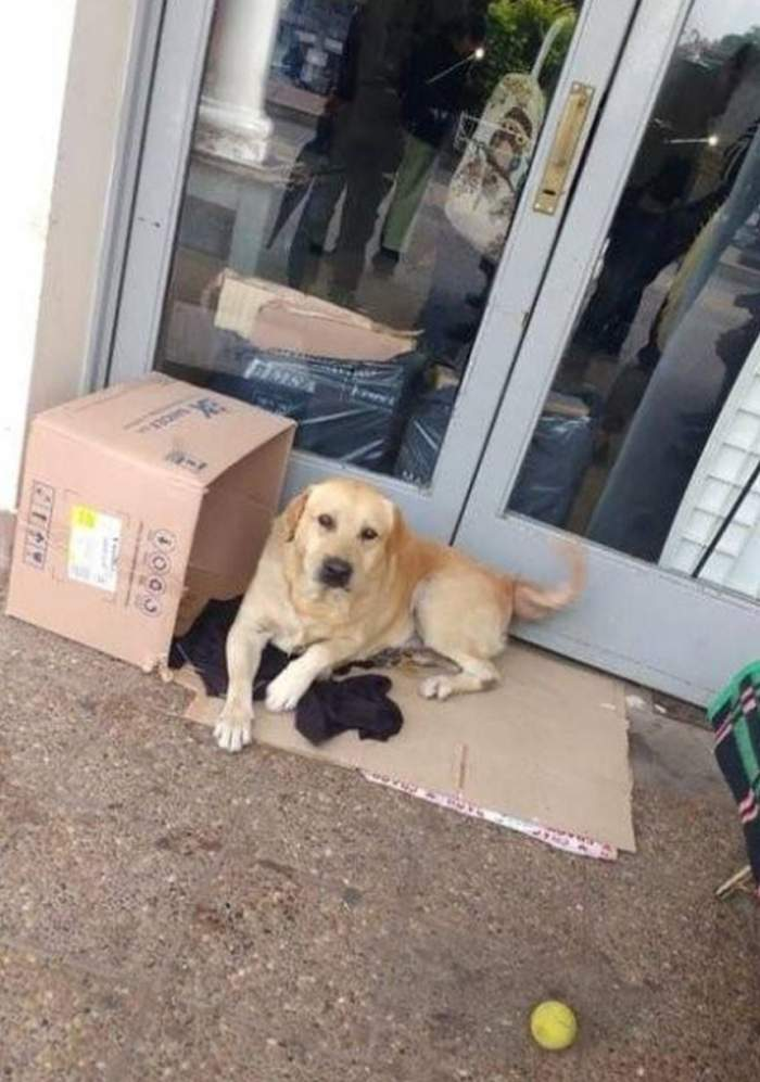 Imagini sfâșietoare. Un câine își așteaptă stăpânul mort în fața spitalului. Patrupedul este nemișcat de o săptămână