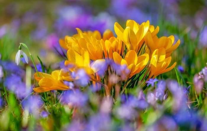 Prognoza actualizată pentru Florii 2019. Cum va fi vremea duminică, 21 aprilie