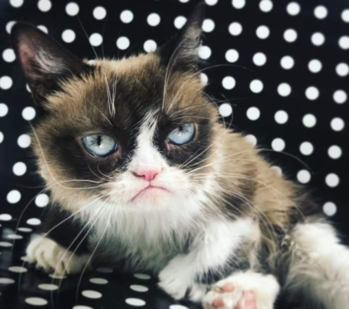 A murit celebra pisică Grumpy. Figura ei morocănoasă a făcut-o cunoscută în toată lumea