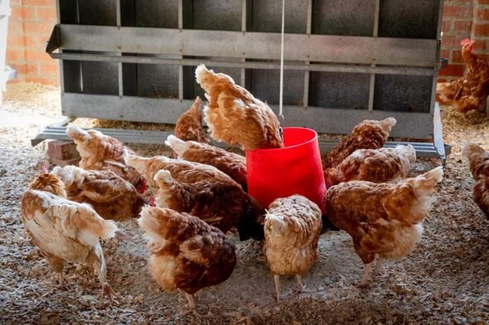 Un bogătaș a furat rațe și găini, ca să cumpere benzină pentru bolidul de 290.000 de euro