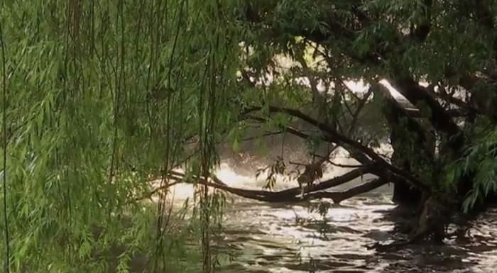 Căutări disperate în Dunăre. O fetiță de 10 ani a intrat în apă la scăldat și nu a mai ieșit