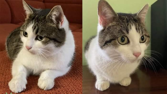 """S-a găsit remediul tuturor bolilor! """"Pisica lecuitoare"""" din Rusia, scoasă la vânzare. Cât costă felina făcătoare de minuni"""