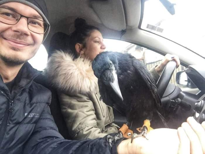 O cioară a devenit animal de companie. Cronco are propriul ei dormitor în Târgu-Jiu