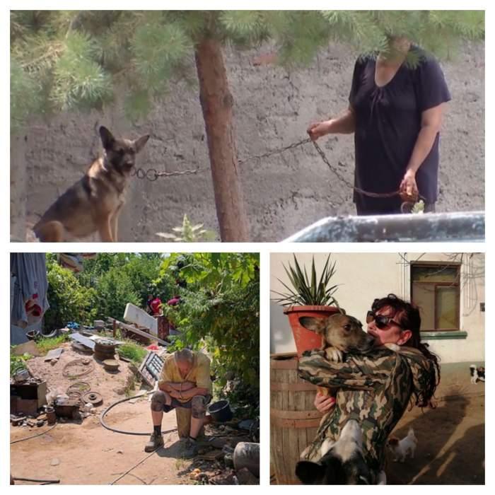 Ce s-a întâmplat cu câinii din curtea groazei, după ce Gheorghe Dincă a fost arestat