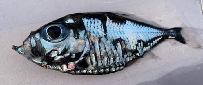 """Da, este adevărat! """"Peștele Picasso"""" a uimit planeta, pentru că arată exact ca un tablou / FOTO"""