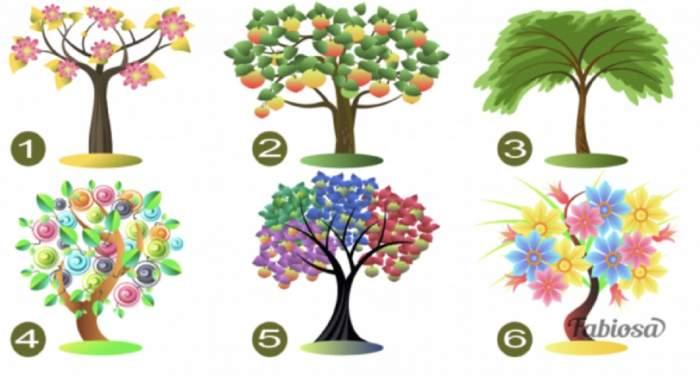 Alege o imagine! Testul copacului îți spune care este trăsătura care te definește