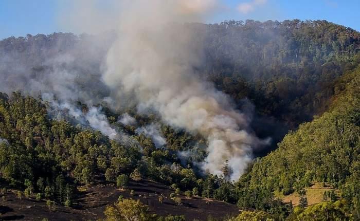Valul de caniculă se abate din nou peste Australia! Pădurile, victime ale temperaturilor ridicate