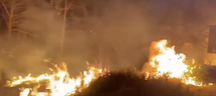 Celebritățile ajută victimele incendiilor din Australia printr-o metodă inedită. Simona Halep s-a alăturat și ea campaniei