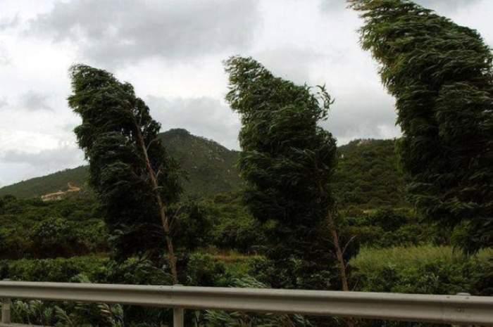 Imagine cu trei copaci îndoiți de vântul puternic