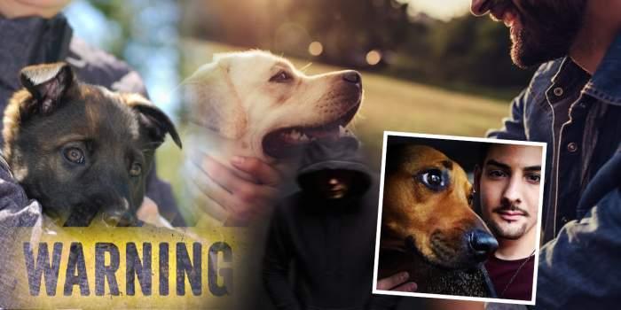 Stăpânii câinilor de rasă, în pericol / Mărturia șocantă a unei victime